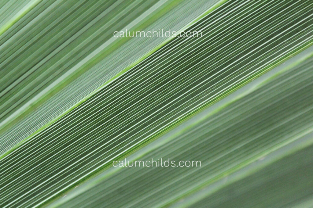 A large green tropical leaf crosses the screen.