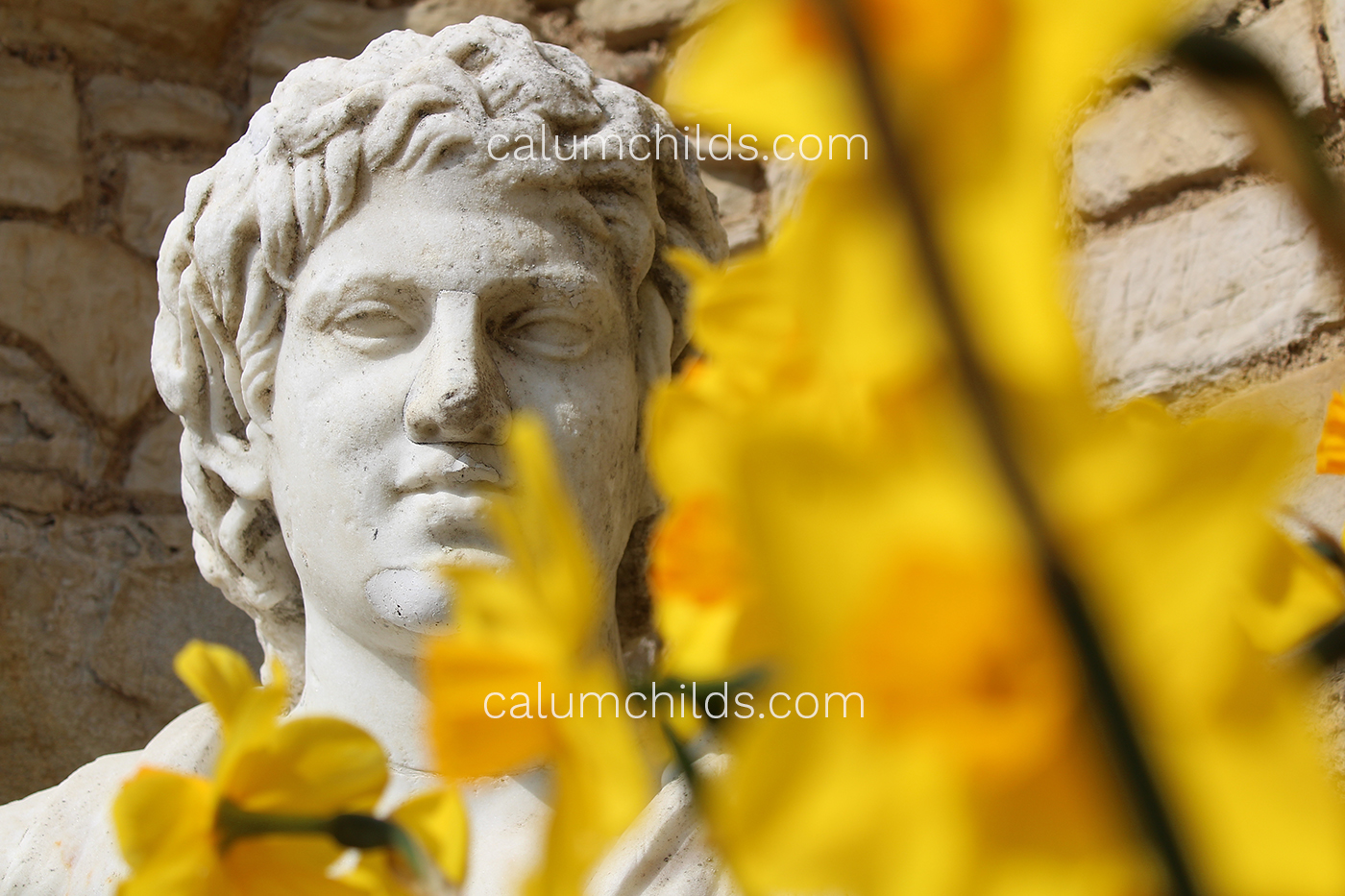 A male statue (left) is surrounded by daffodils.